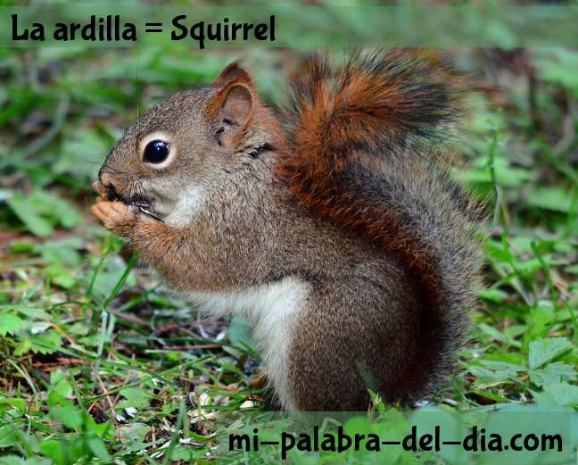La ardilla, a squirrel for my Spanish blog.